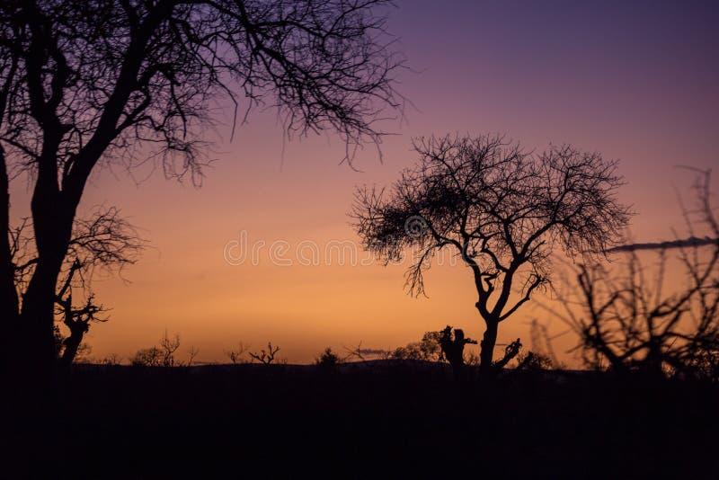Coucher du soleil pourpre dedans derrière des arbres, Afrique du Sud photo libre de droits