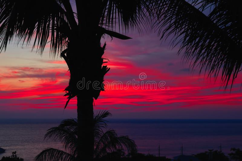 Coucher du soleil pourpre dramatique au-dessus des palmiers foncés de l'eau et de silhouettes Le paysage marin avec des nuages en photo libre de droits