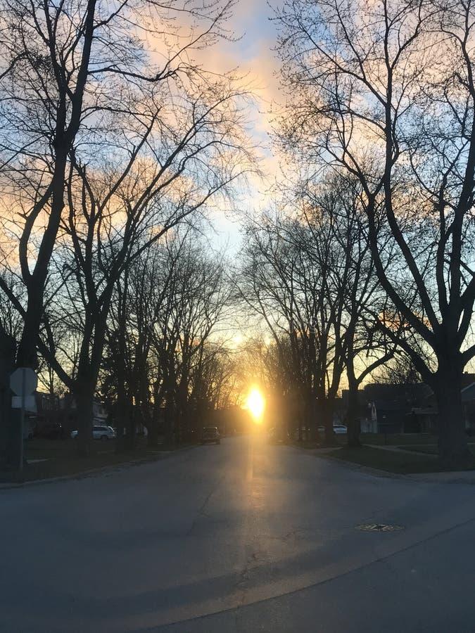 Coucher du soleil rayé par arbre images libres de droits