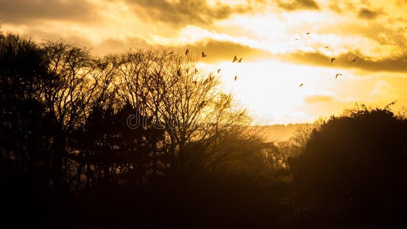 Coucher du soleil renversant en Irlande, arbres silhouettés et oiseaux photographie stock libre de droits