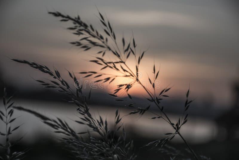 Coucher du soleil romantique sur la rivière de Th photos stock