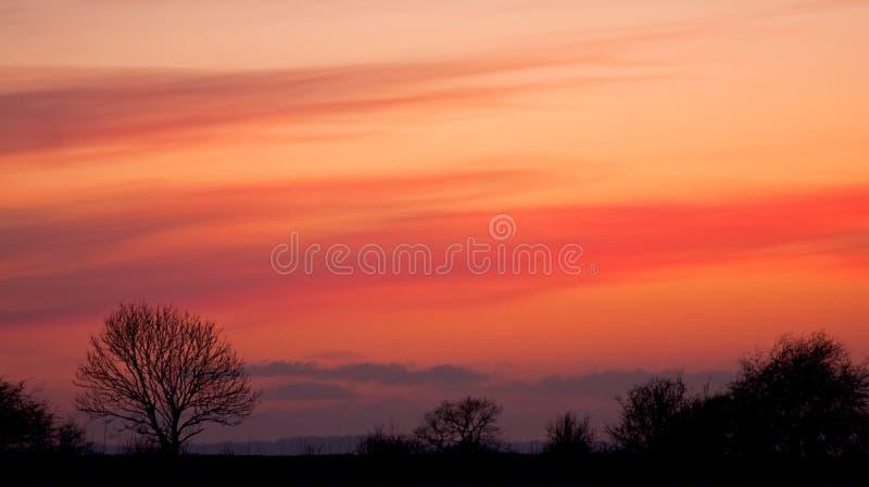 Coucher du soleil rose de l'hiver au-dessus d'un treeline silhouetté photos libres de droits