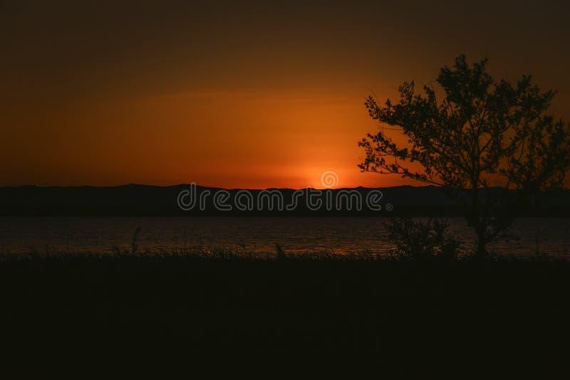 Coucher du soleil rouge foncé renversant et arbre isolé photos stock