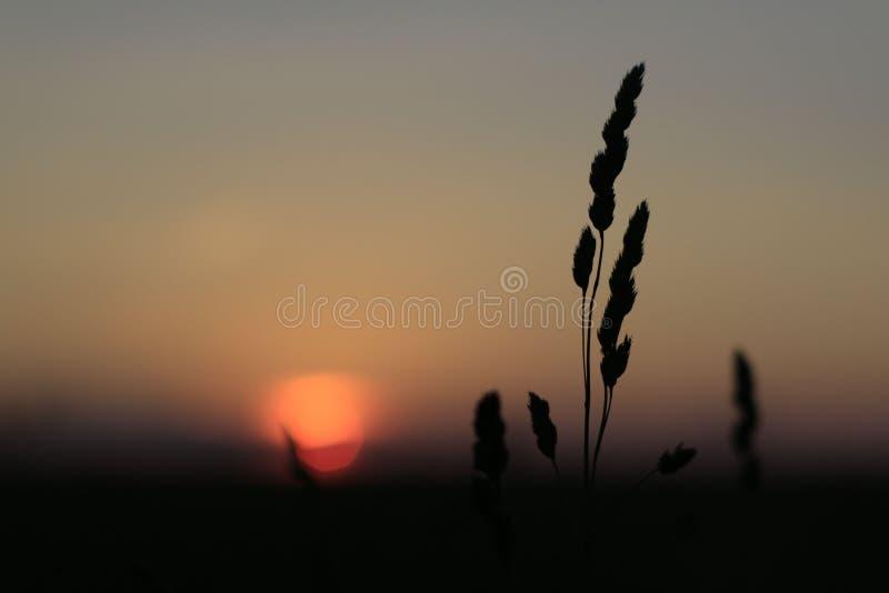 Coucher du soleil rouge gentil photo stock