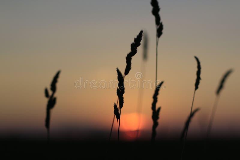 Coucher du soleil rouge gentil en été photographie stock