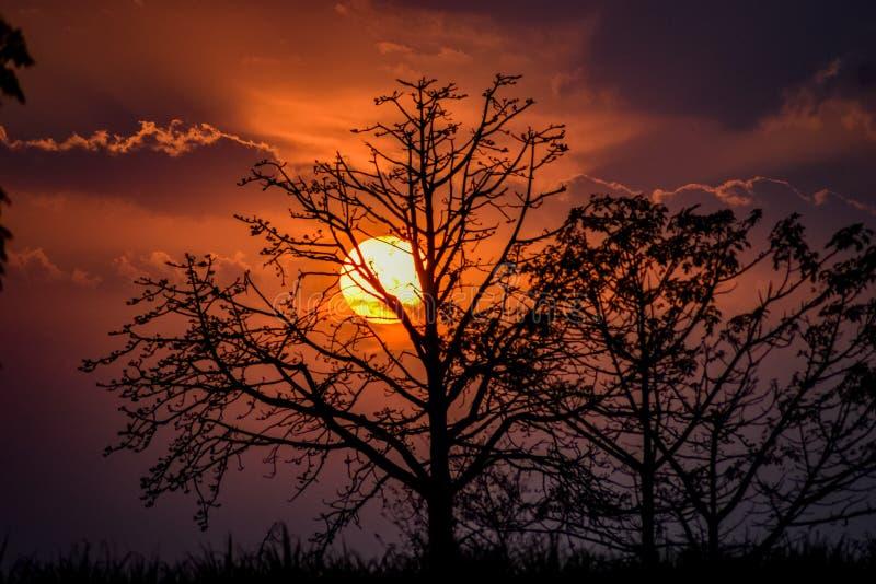 Coucher du soleil rouge lumineux avec l'arbre fonc? image stock