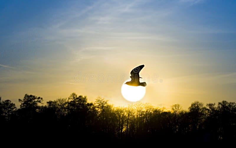 Coucher du soleil rouge. oiseau et soleil photographie stock