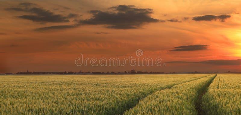 Coucher du soleil rural image libre de droits