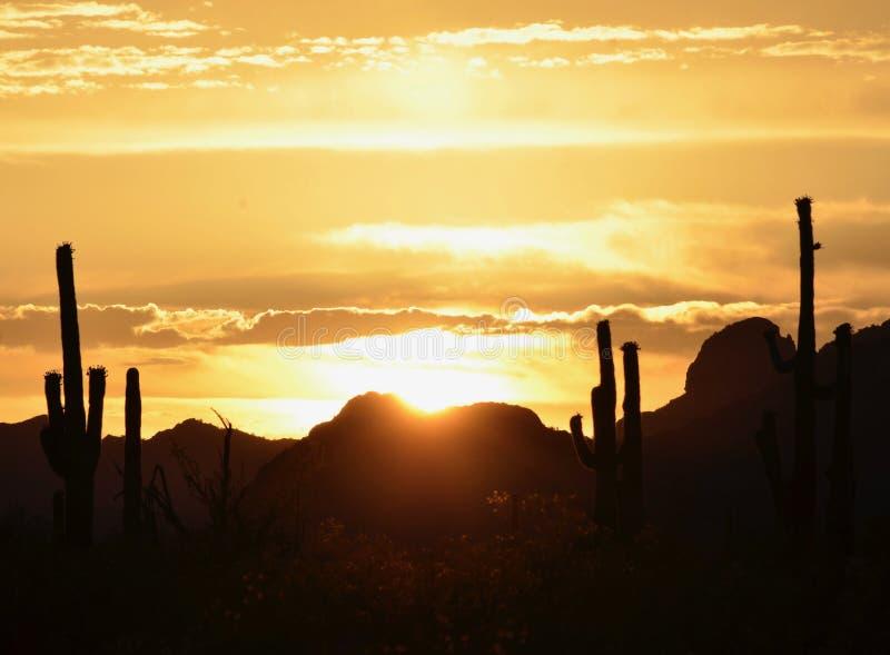 Coucher du soleil sensationnel de désert de Sonoran, sentinelles de Saguaro dans la scène photos libres de droits