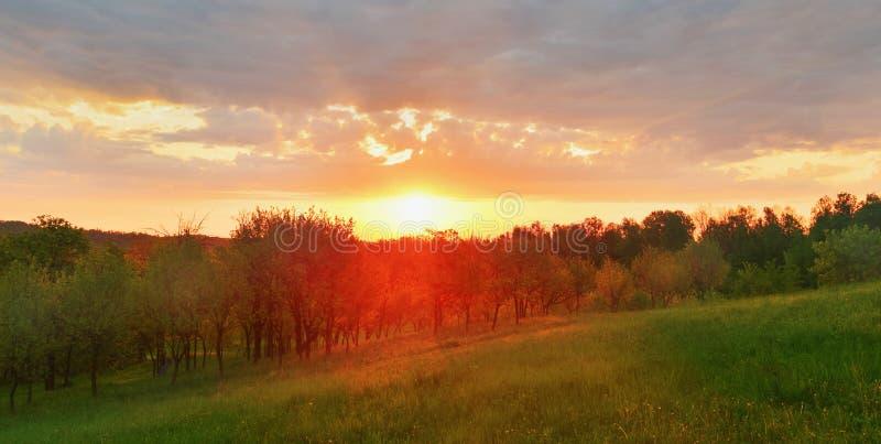 Coucher du soleil stupéfiant au-dessus de la forêt de ressort photographie stock libre de droits