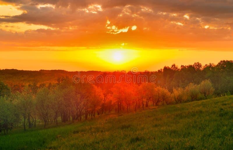 Coucher du soleil stupéfiant au-dessus de la forêt de ressort images libres de droits