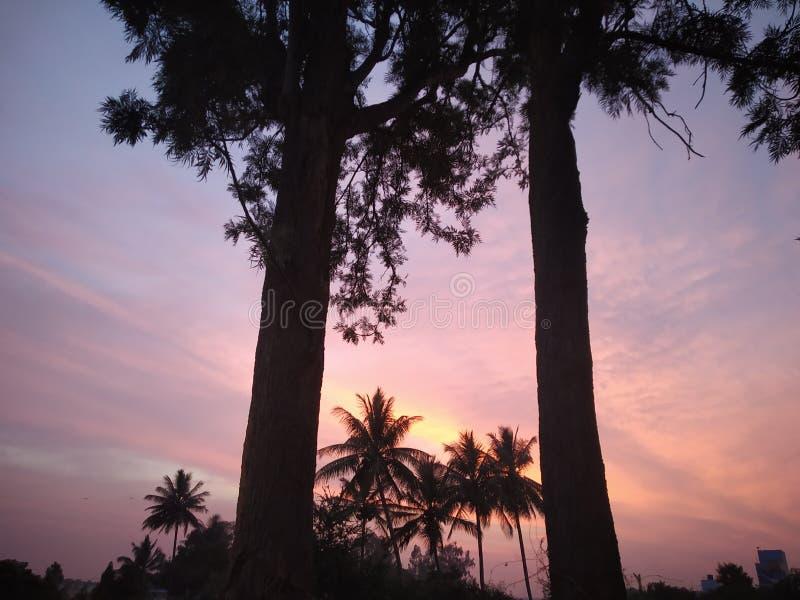 Coucher du soleil stupéfiant entre les palmiers avec les milieux bleu-d'or de ciel photo libre de droits