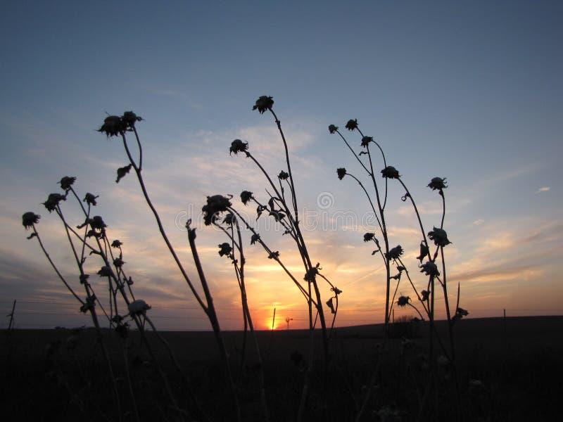 Coucher du soleil sur la prairie image stock