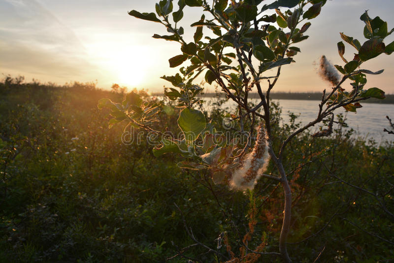 Coucher du soleil sur la rivière de toundra photos libres de droits
