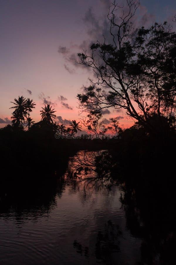 Coucher du soleil sur la silhouette de rivière des arbres et de la réflexion de paume image libre de droits