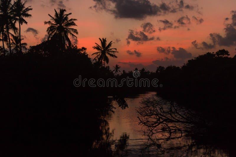 Coucher du soleil sur la silhouette de rivière des arbres et de la réflexion de paume photo libre de droits