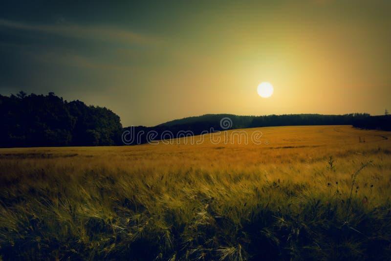 Coucher du soleil sur le champ du grain Paysage avec des champs de grain photo stock