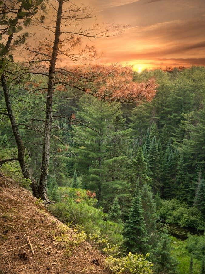 Coucher du soleil sur le journal de deux fleuves, stationnement de l'algonquin, Canada photo stock