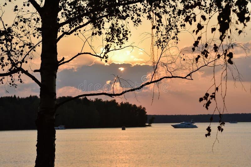 Coucher du soleil sur le lac, silhouette d'un bouleau sur un backgroun de coucher du soleil photo stock