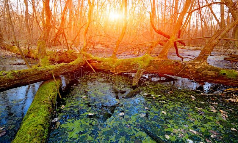 Coucher du soleil sur le marais image stock
