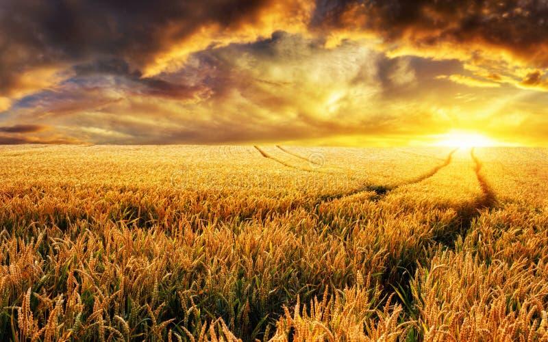 Coucher du soleil sur un champ, foyer sur des usines de premier plan images libres de droits