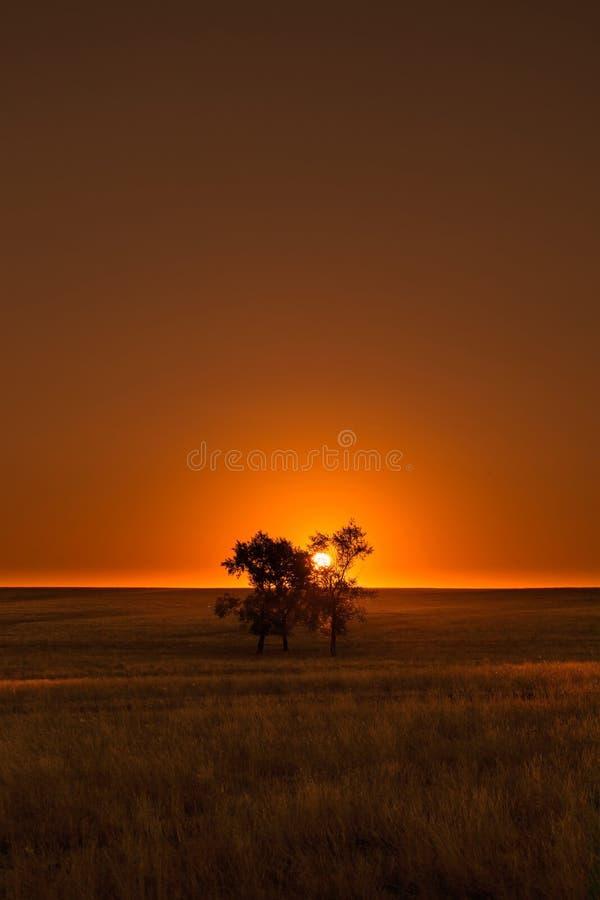 Coucher du soleil sur un pré vert avec un arbre photographie stock libre de droits