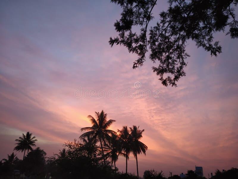 Coucher du soleil tranquille avec des palmiers derrière les milieux stupéfiants photos libres de droits