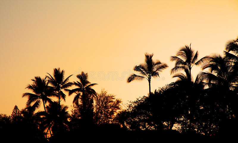 Coucher du soleil tropical images stock
