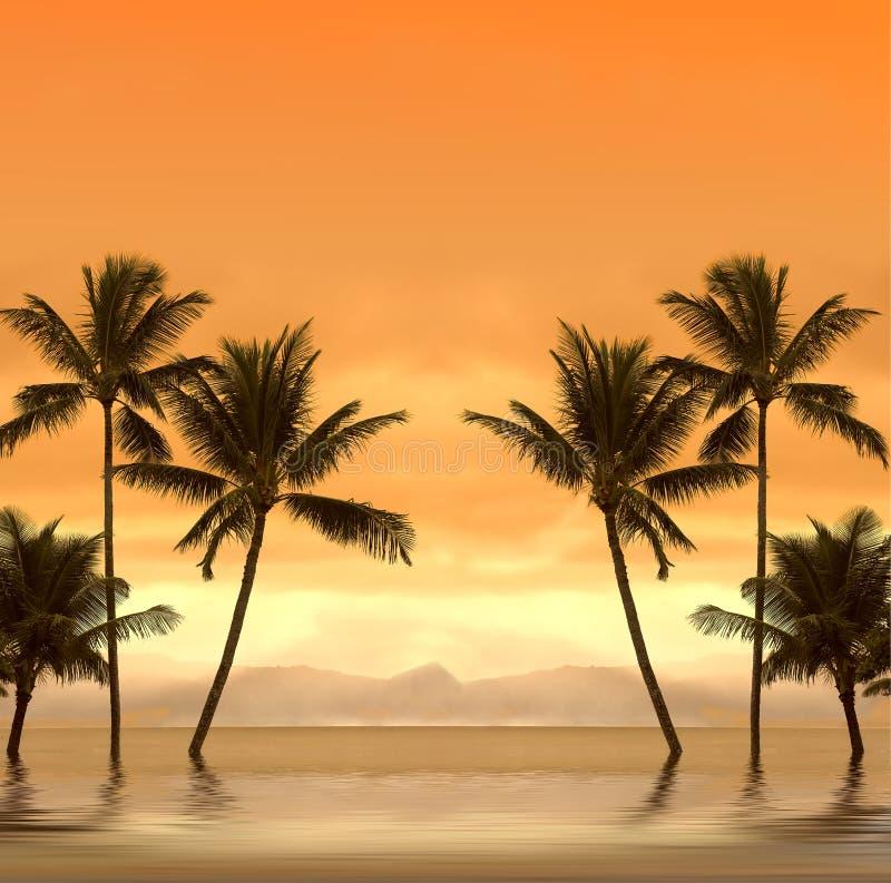 Coucher du soleil tropical image libre de droits