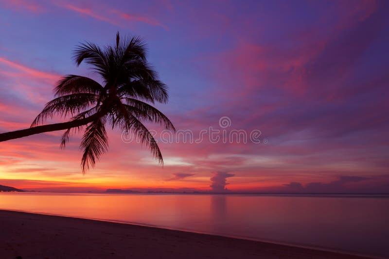 Coucher du soleil tropical avec le silhoette de palmier images libres de droits