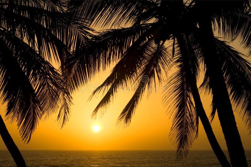 Coucher du soleil tropical de palmier images libres de droits