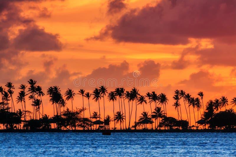 Coucher du soleil tropical de paume photo stock