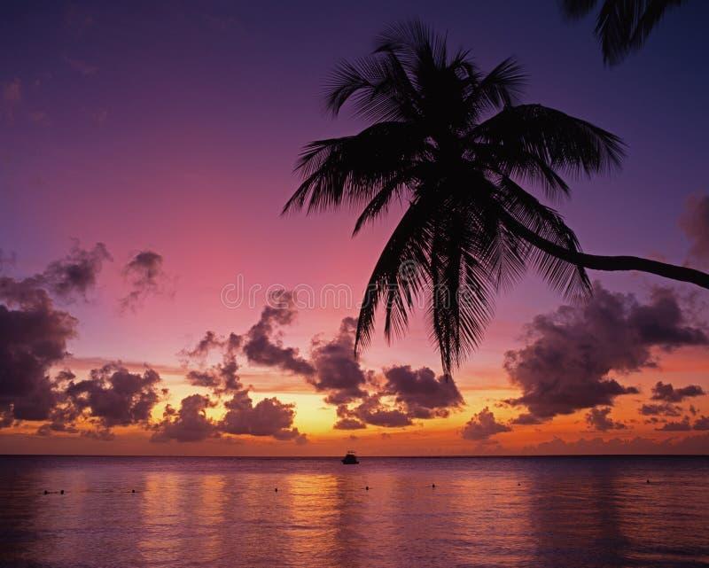 Coucher du soleil tropical, Tobago. image stock