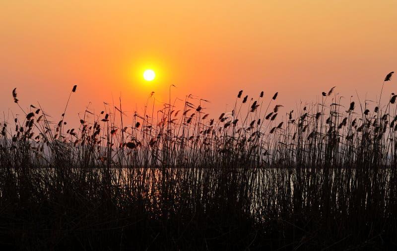 Coucher du soleil tubulaire photographie stock libre de droits