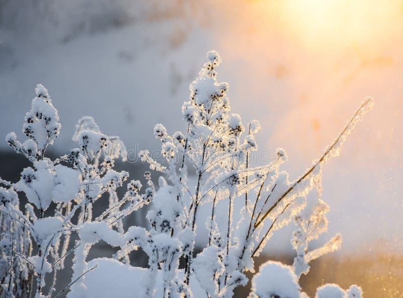 Coucher du soleil un jour givré photo stock