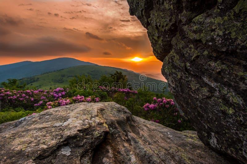 Coucher du soleil vibrant derrière Jane Bald Rhododendron images stock