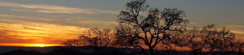 Coucher du soleil vif panoramique avec des arbres images stock