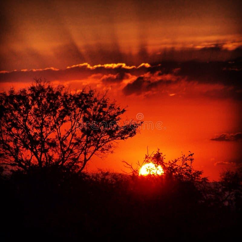 Couchers du soleil africains photographie stock libre de droits