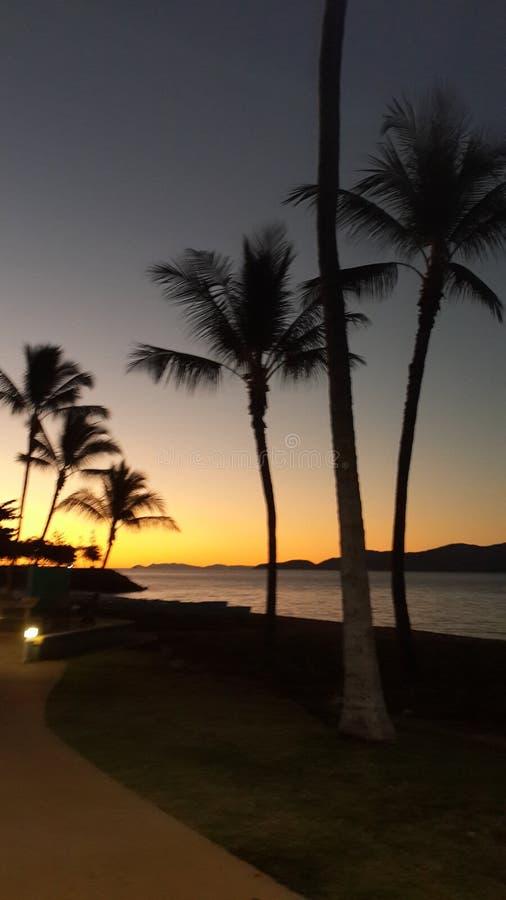 Couchers du soleil des palmiers n photo libre de droits