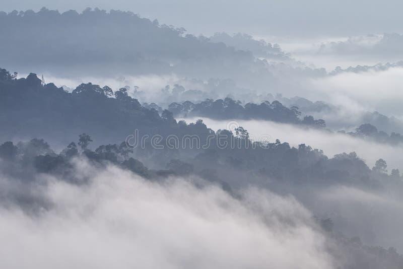 Couches de forêts brumeuses images libres de droits