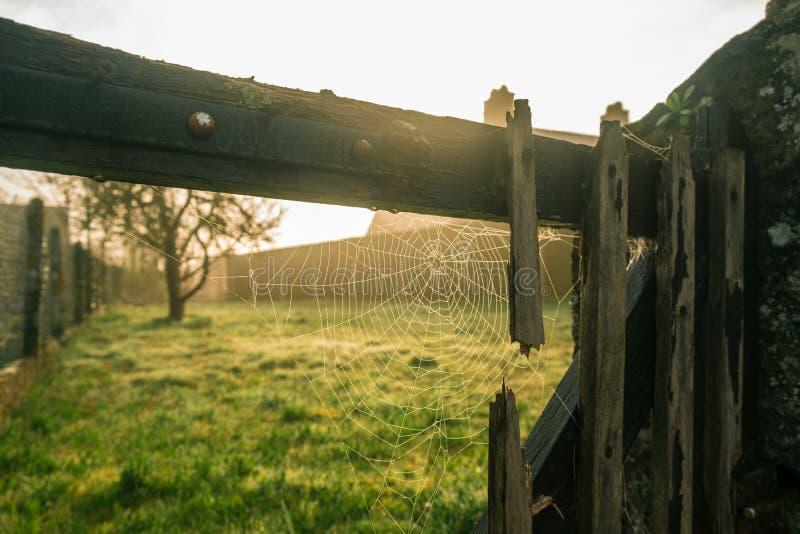 Couesmes-Vauce, сеть паука восхода солнца стоковая фотография