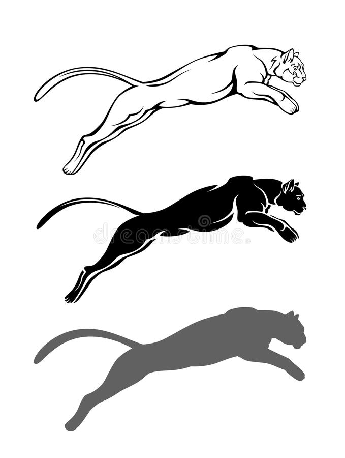 Cougar. Jumping on a white background