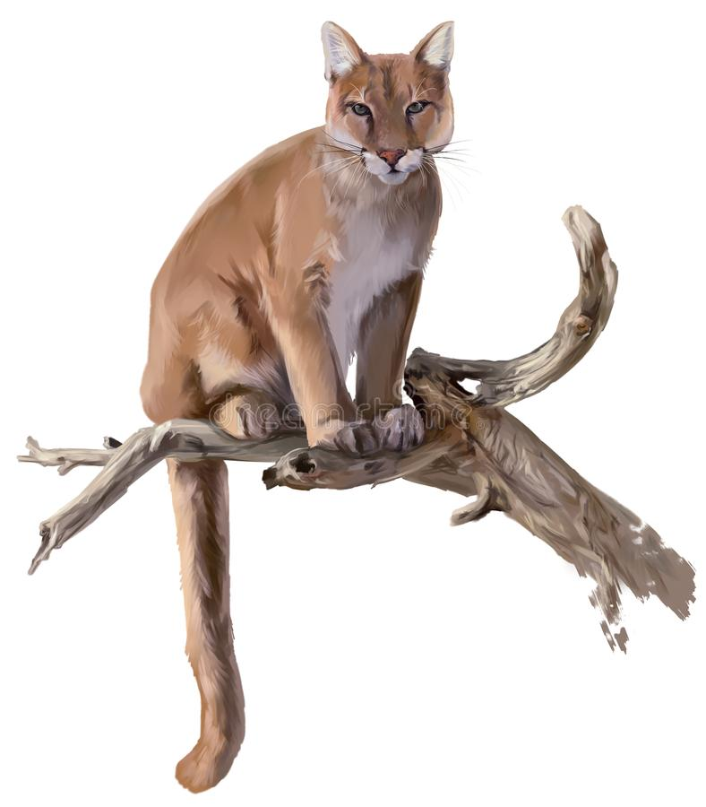 Cougar sits on a dry tree watercolor drawing royalty free illustration