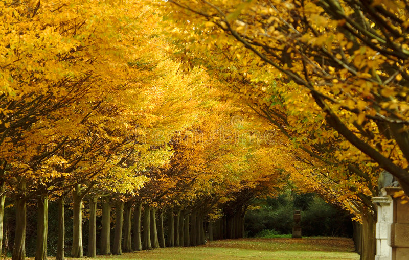 Couleur d'arbre d'automne photos stock