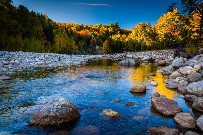 Couleur d'automne le long de la rivière de Peabody dans le ressortissant blanc de montagne images libres de droits