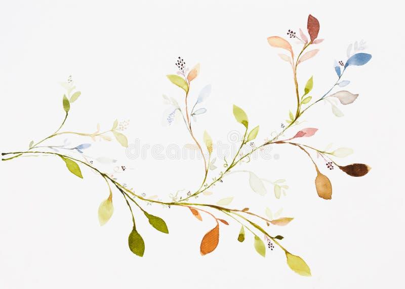 Couleur d'eau d'image, aspiration de main, feuilles, branches, lierre illustration de vecteur