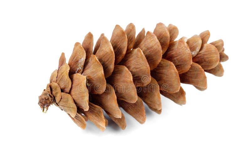 Couleur de brun de cône de cèdre image stock