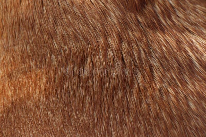 Couleur de caramel de texture de cheveux de chien photos libres de droits