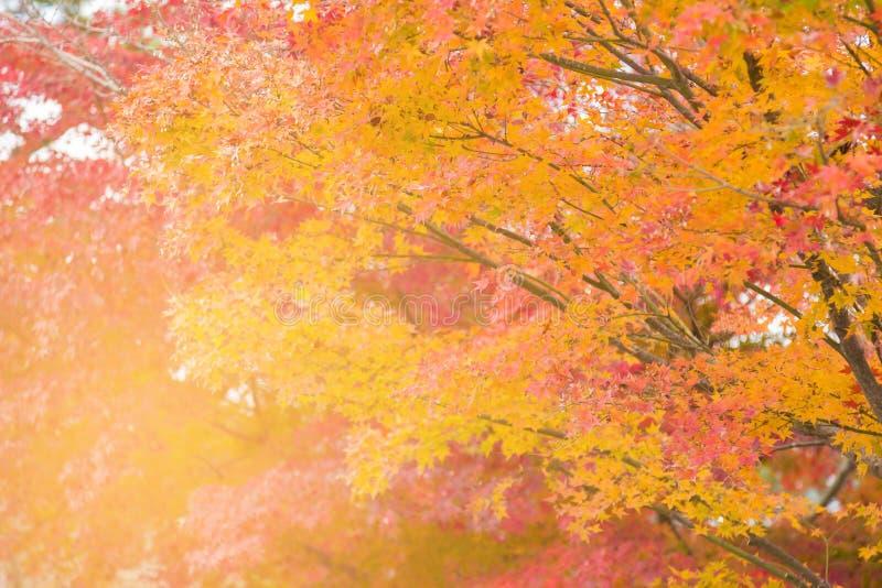 Couleur de multiple de saison d'automne d'arbre d'érable photos libres de droits