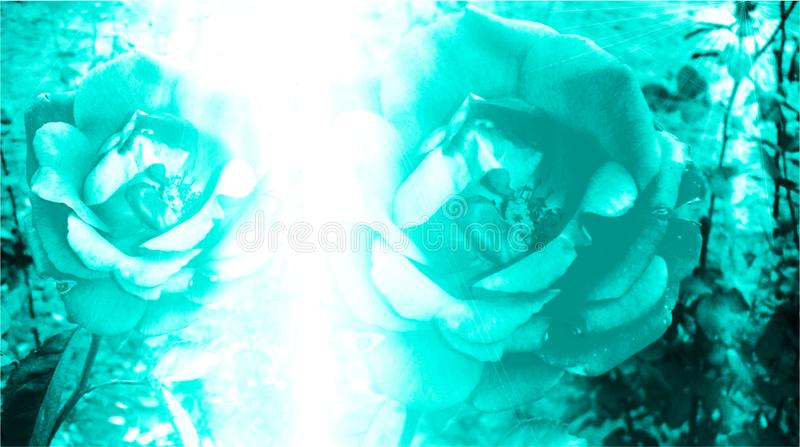 Couleur de turquoise ombragée et brouillée avec le fond d'image d'effet de la lumière et la conception floraux générés par ordina photo stock